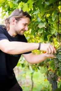 Praxis und Theorie verzahnt das duale Studium Weinbau und Oenologie mit integrierter Ausbildung zum Winzer. Fotos: Weincampus Neustadt/Stephan Presser